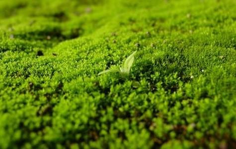 Pr sence de mousse dans la pelouse tirogaverd for Supprimer la mousse de la pelouse